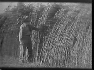 Farmer Inspecting Marijuana Crop